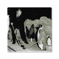 Second Story Gordie Howe Playing with Penguins Tile Coaster